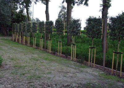 leibomen door houdijk hoveniers